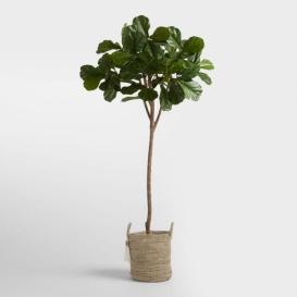 worldmarket_fiddleleaf_fig