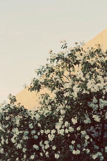 juniperprintshop_DUSTY